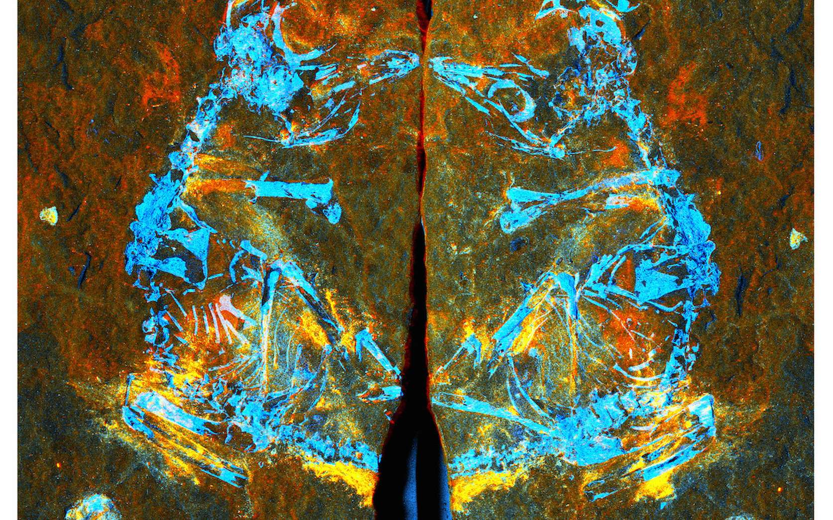 Sur cette image en fausses couleurs, obtenue par rayonnement synchrotron, sont détaillés les différents éléments présents dans le fossile : du fer en rouge, du silicium en vert et du phosphore en bleu. © Fabien Knoll et al., 2018