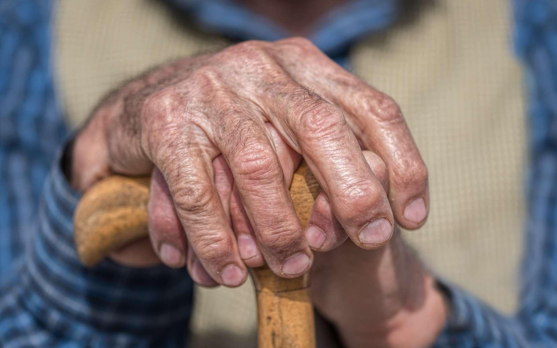 Selon des chercheurs américains, le nombre de neurones présents dans le cortex serait, de loin, le meilleur indicateur de la longévité d'une espèce. © Sondem, Fotolia