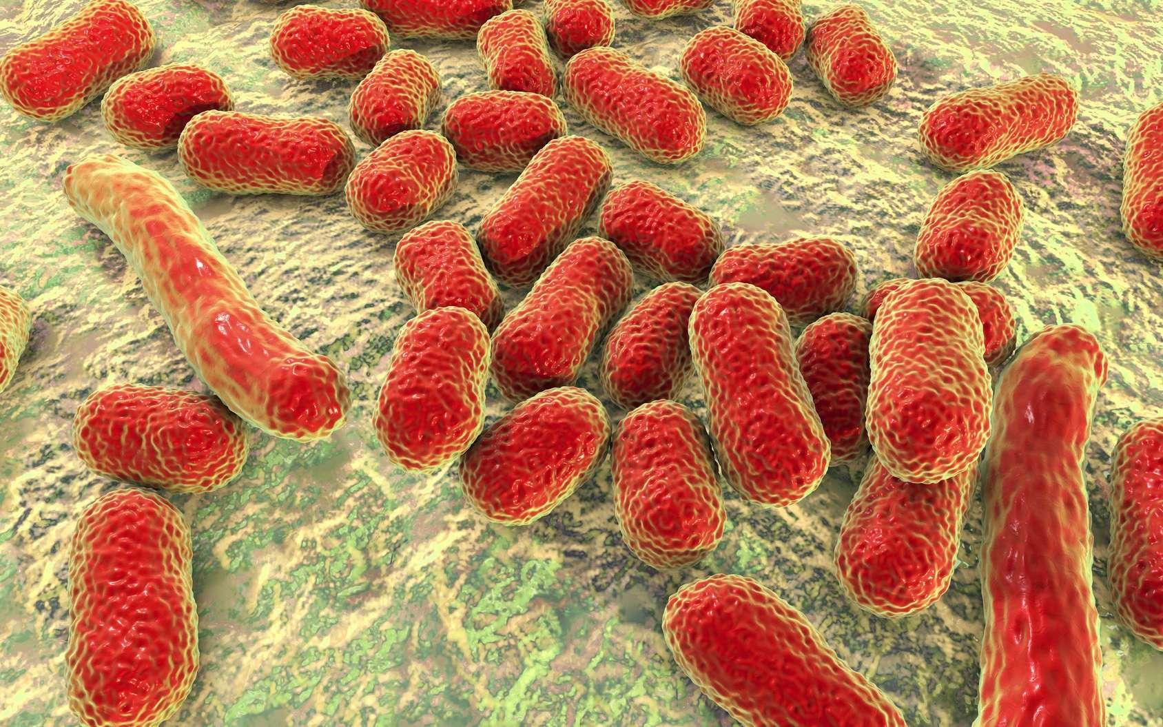 Les bactéries multirésistantes laissent parfois les patients dans l'impasse thérapeutique. © Kateryna_Kon, Fotolia