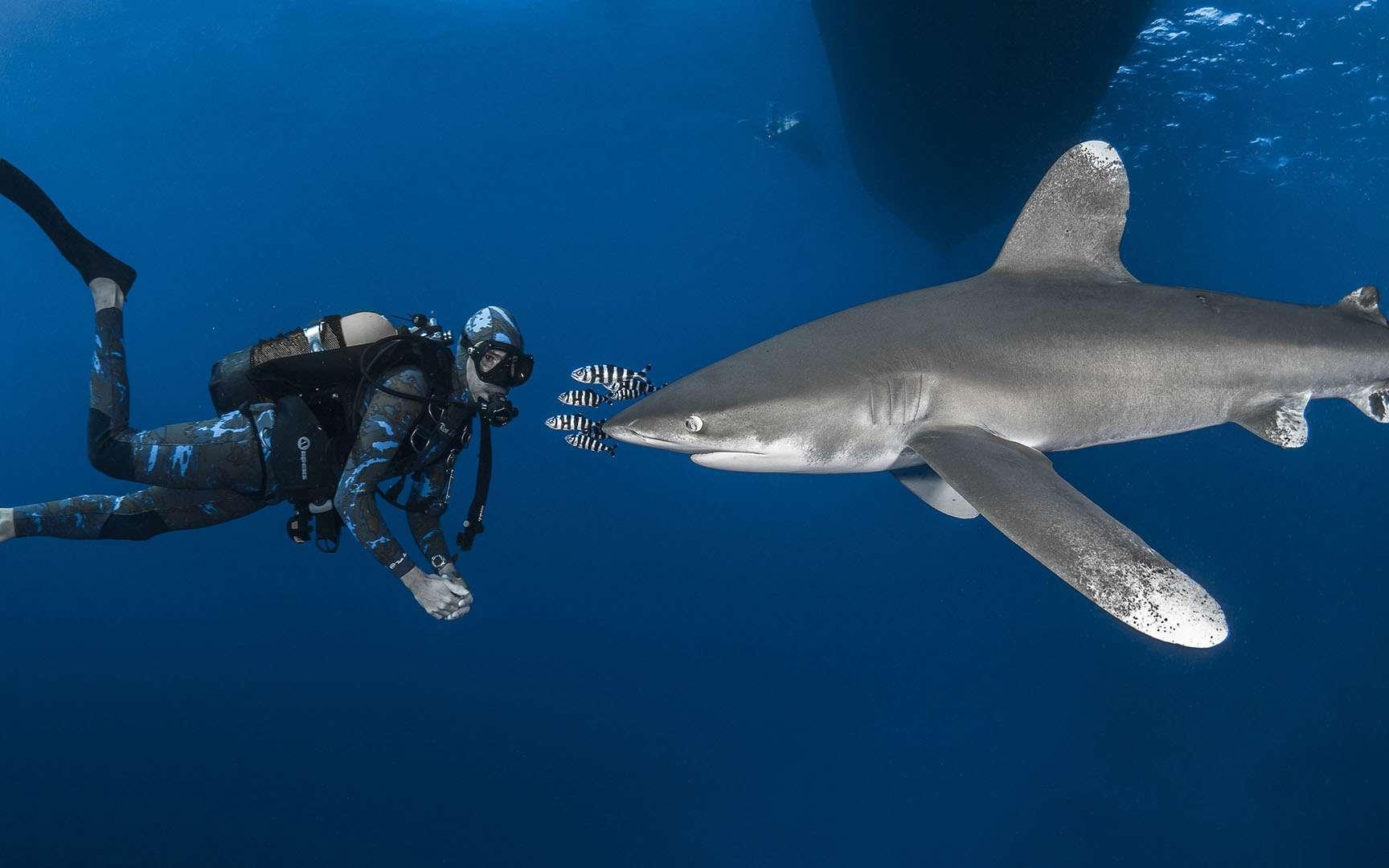 La peur du requin serait-elle irrationnelle ? © Greg Lecoeur, tous droits réservés