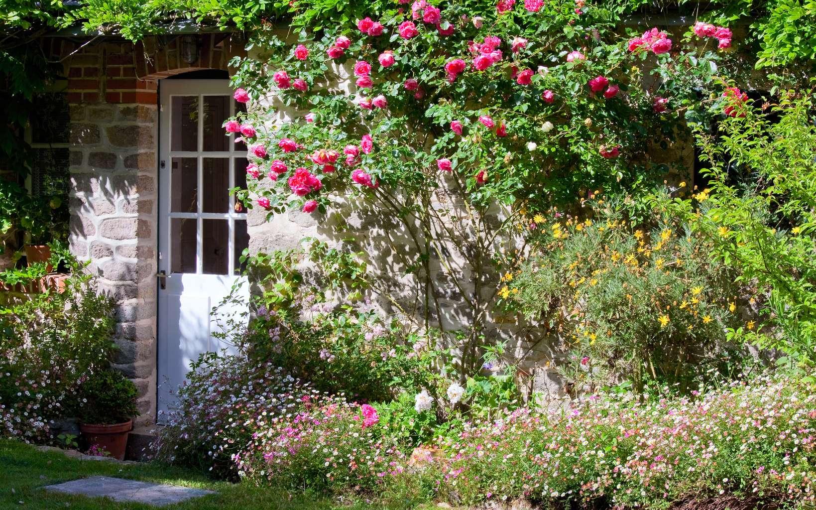 Des plantes pourraient construire des maisons. © Thierry Ryo, Fotolia