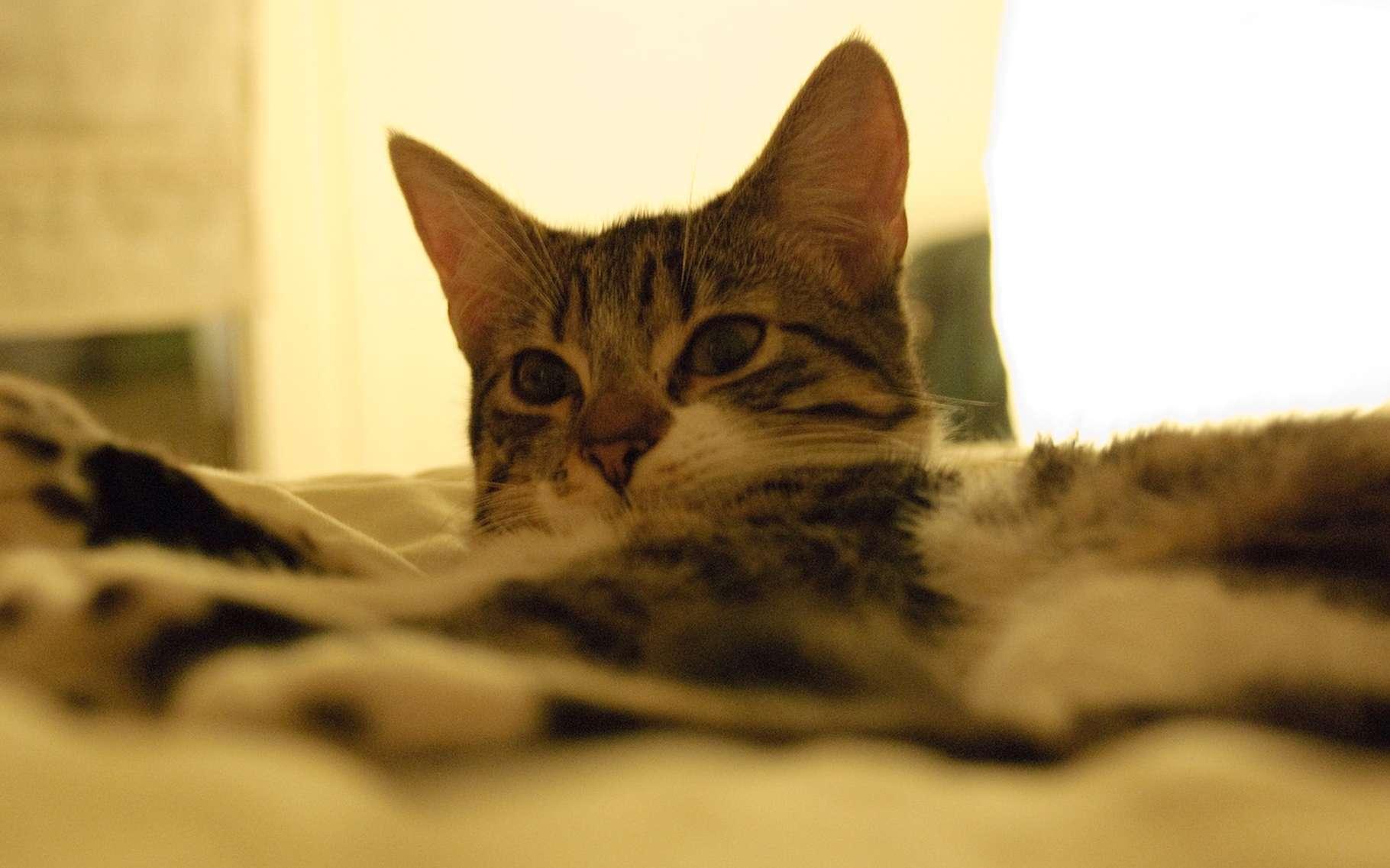 La musique peut-elle aussi adoucir les mœurs des chats ? © Jérôme Decq, Flickr, CC by 2.0