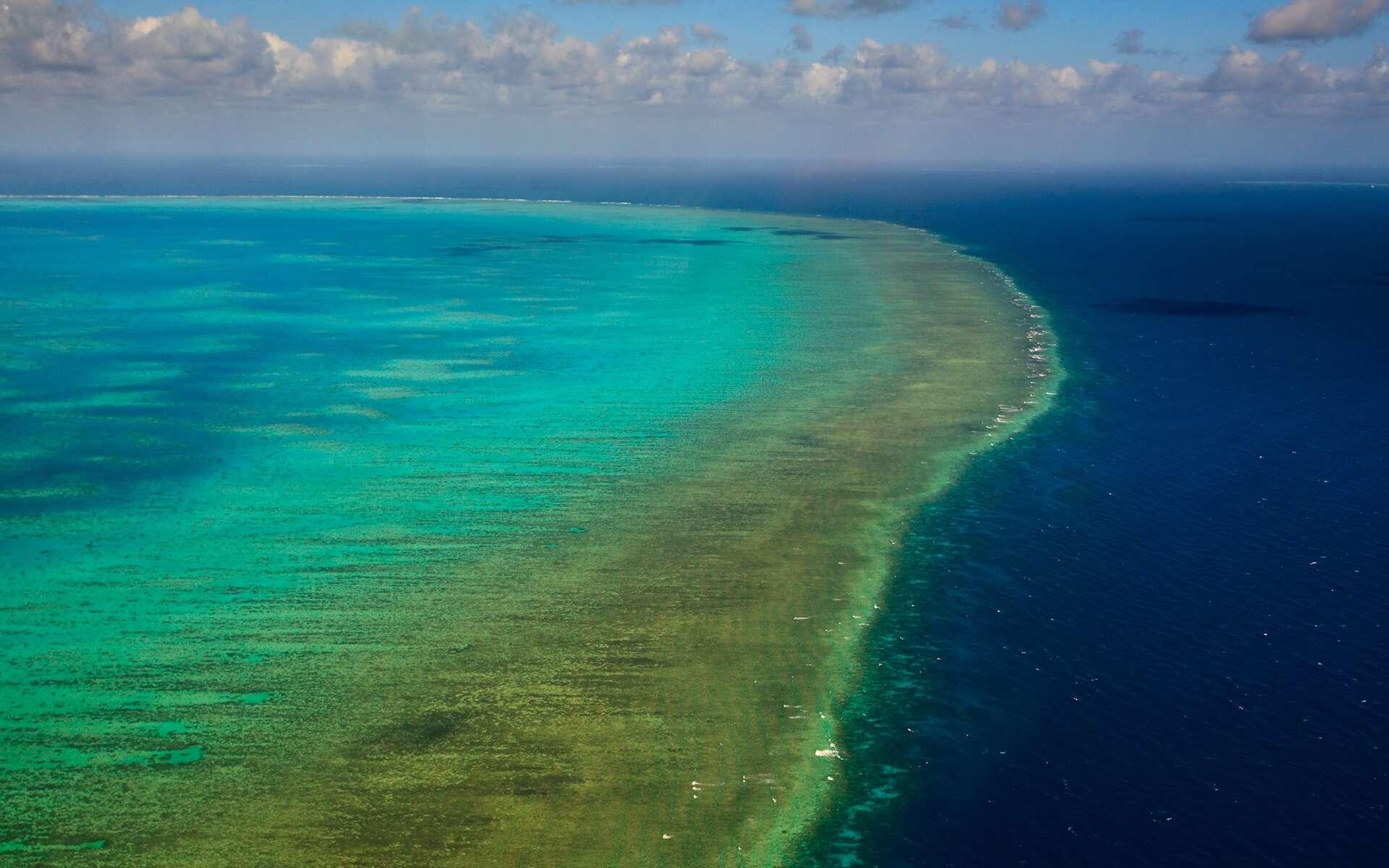 Représentant moins de 0,1 % de la surface des océans, les récifs coralliens comme celui de la Grande Barrière de corail australienne abritent environ un quart des espèces marines. L'acidification des océans menace de les mettre en péril d'ici 2050. © Pete Niesen, Shutterstock.com