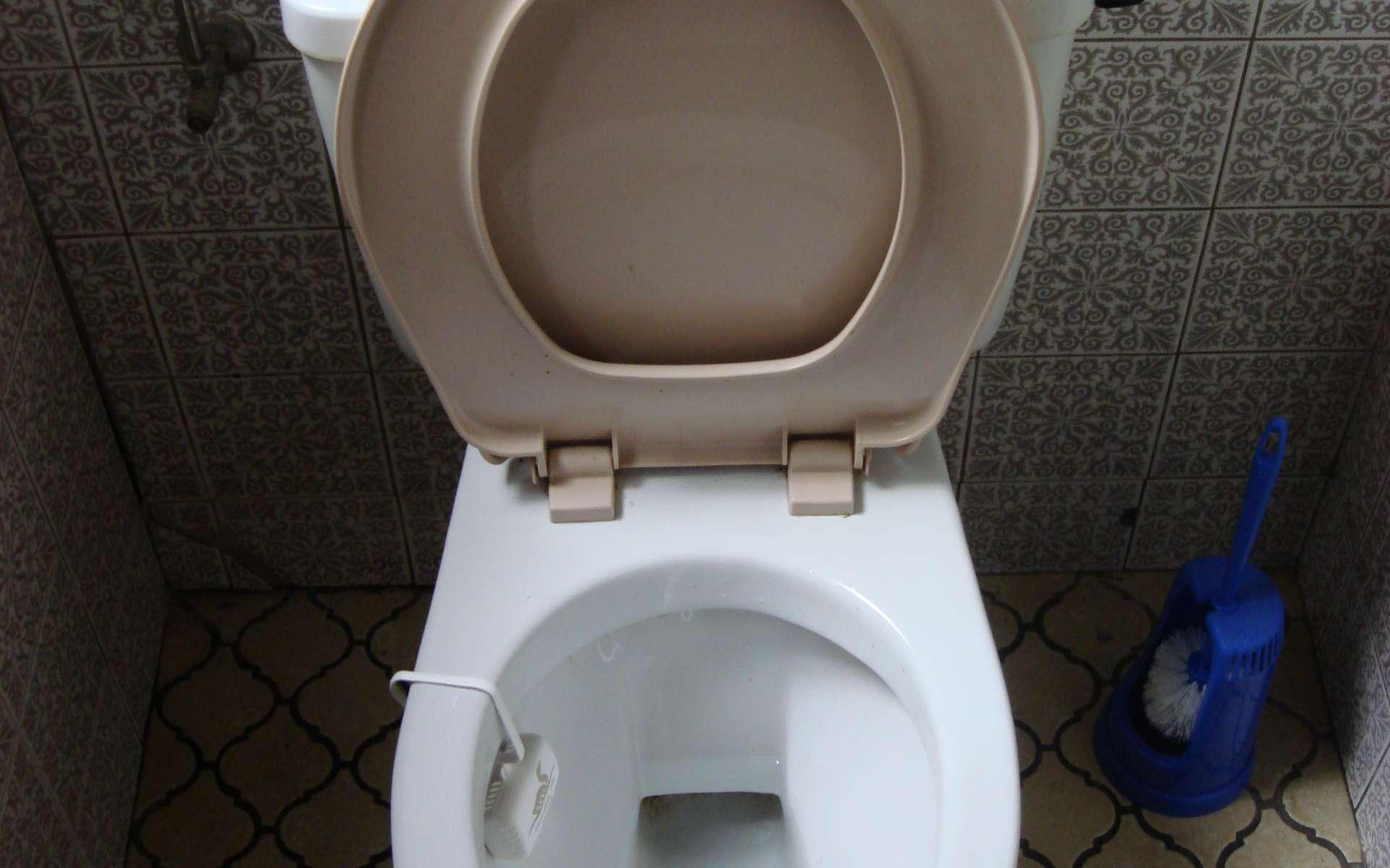 Les WC broyeurs peuvent être à broyeur intégré ou à broyeur indépendant. © twicepix, Flickr, cc by sa 2.0