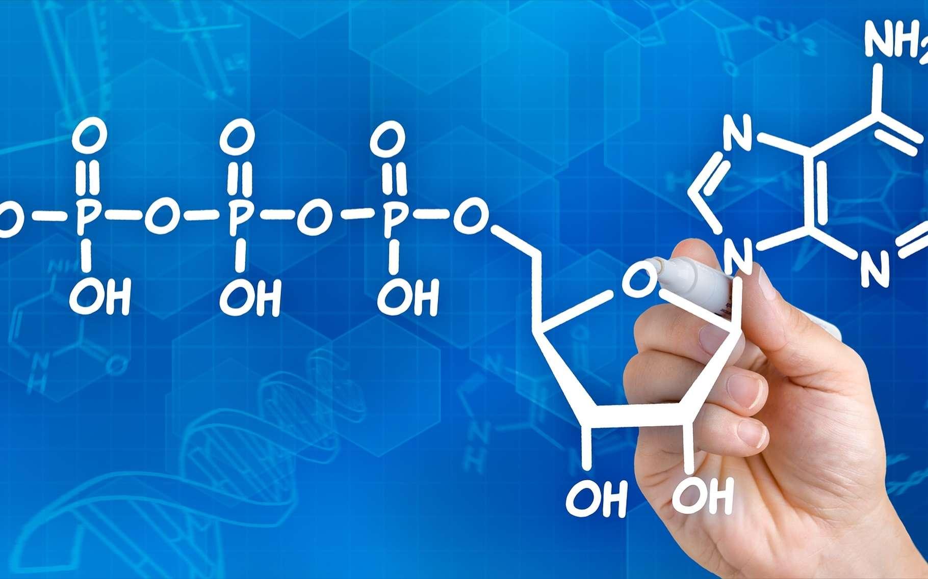 L'ATP fournit de l'énergie pour l'activité des cellules. © Zerbor, Shutterstock
