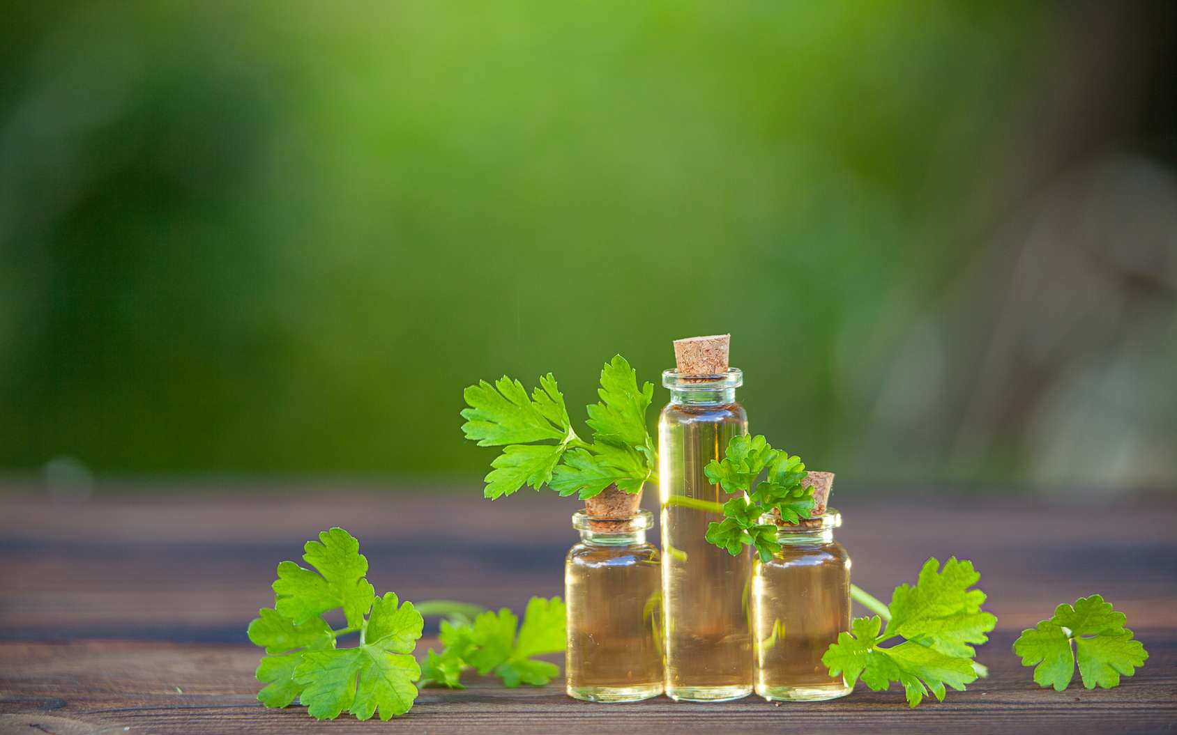 Le persil et les antioxydants qu'il contient luttent contre les radicaux libres impliqués dans les maladies cardiovasculaire. © solstizia, Fotolia