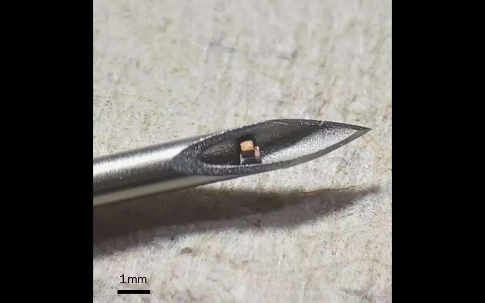 Cette puce mesure moins de 0,1 mm³. © Chen Shi, Columbia Engineering