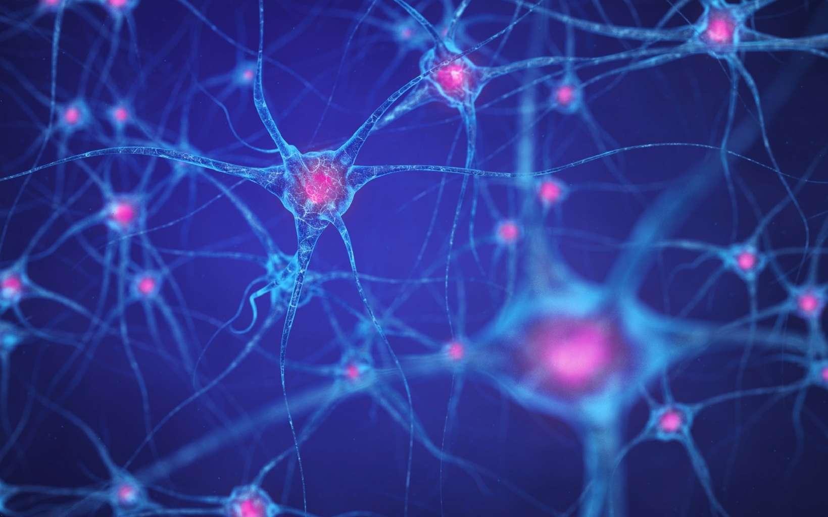 La sclérose en plaques s'attaque à la gaine de myéline des neurones. © nobeastsofierce, Fotolia