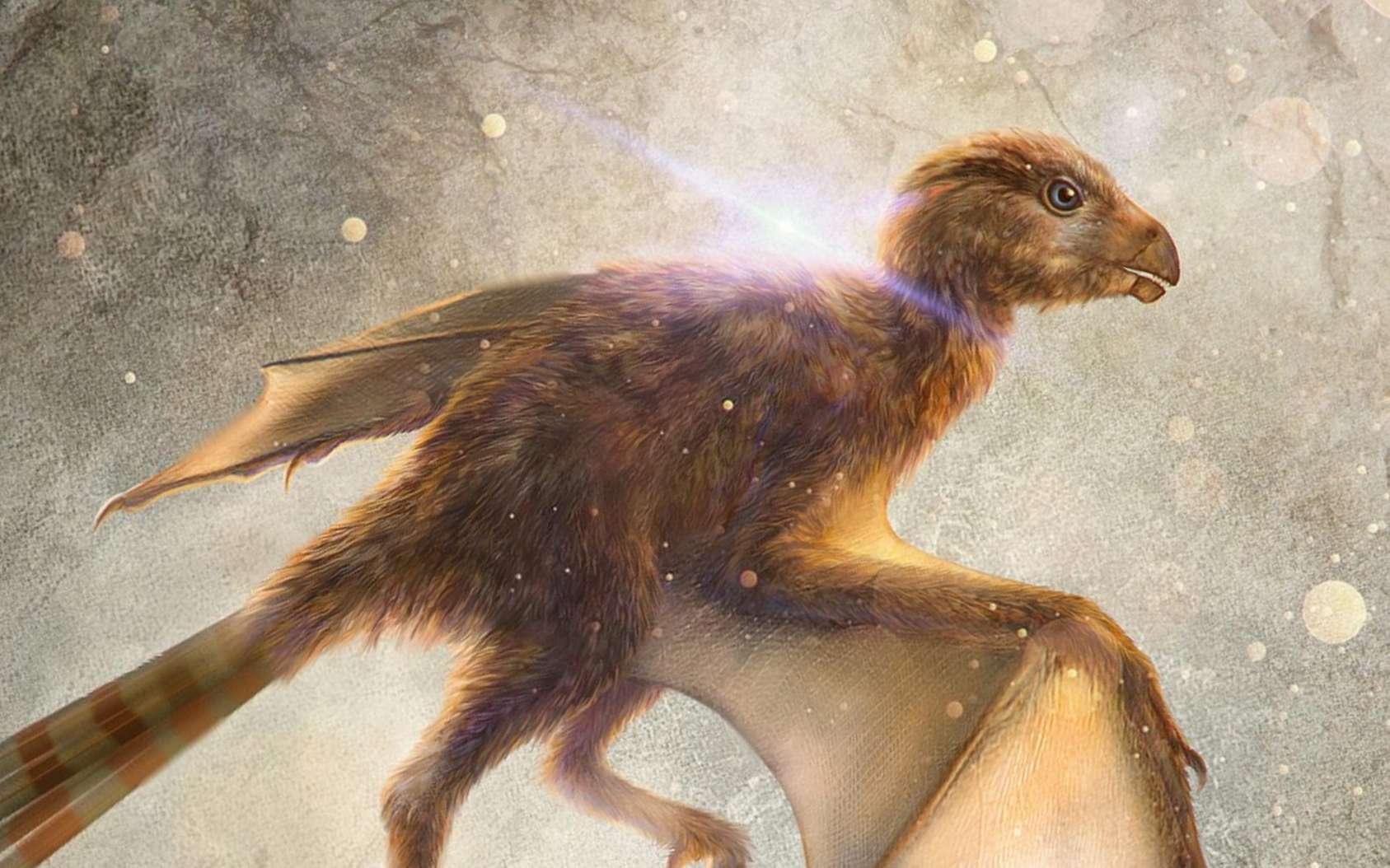 Illustration de Ambopteryx longibrachium, petit dinosaure capable de voler qui vivait il y a 163 millions d'années. © M. Chung-Tat Cheung, Nature