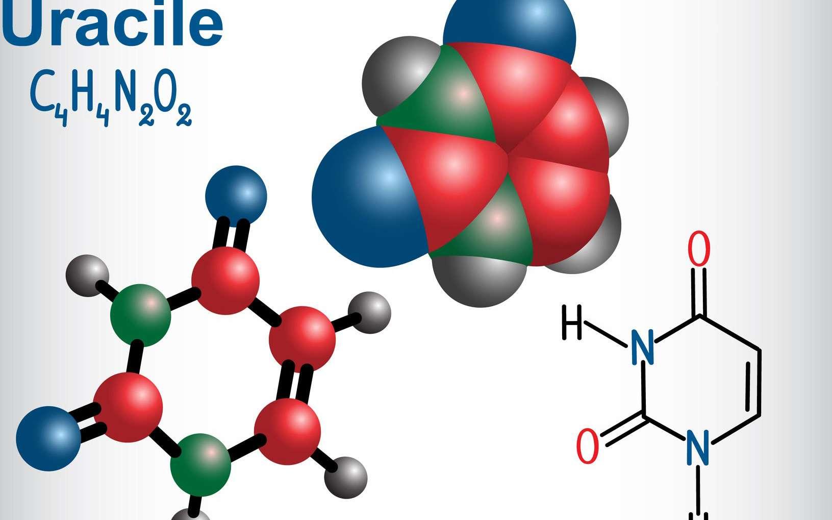 L'uracile est une base pyrimidique avec un noyau aromatique. © bacsica, Fotolia