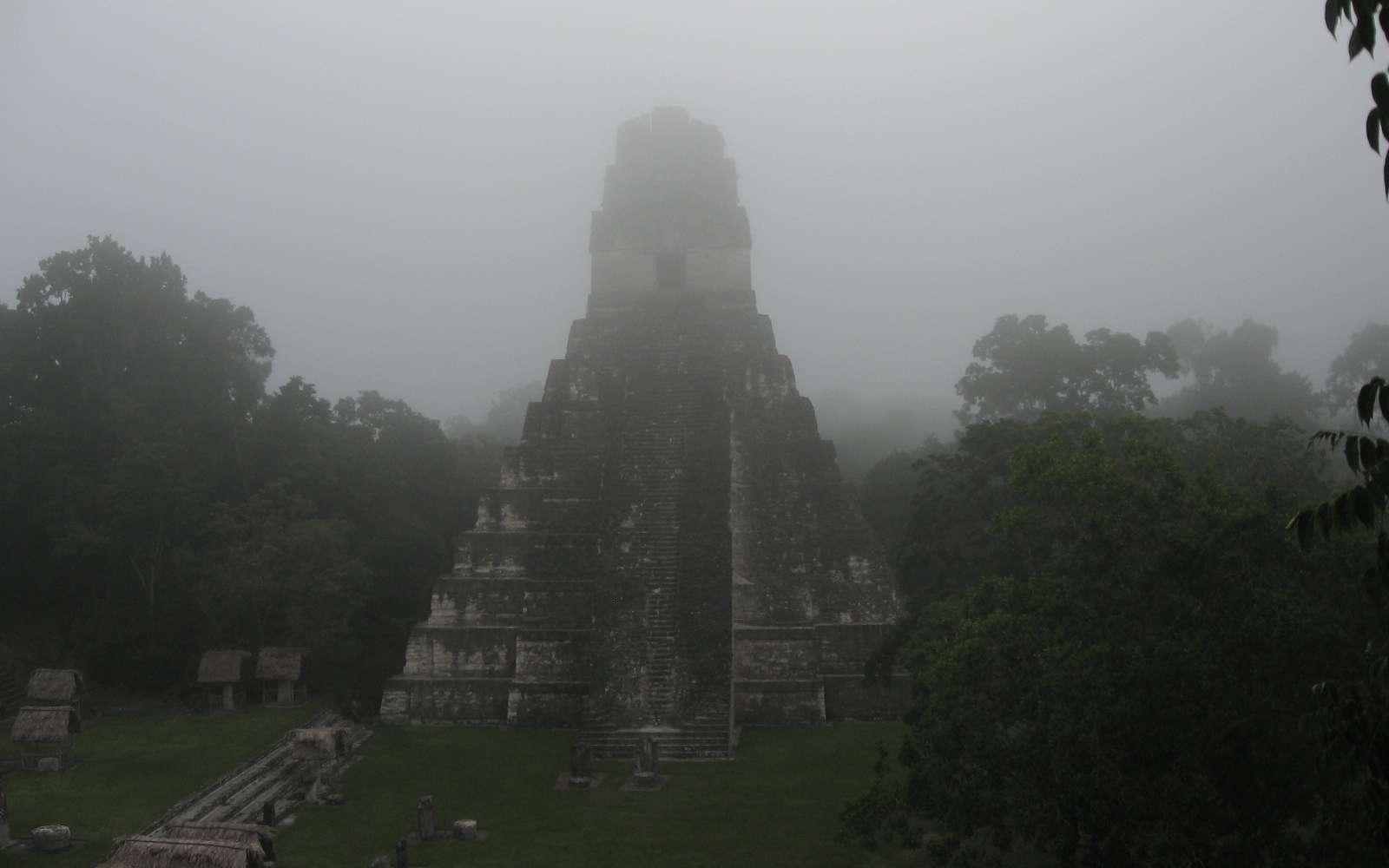 Un temple de la cité de Tikal située au Guatemala, qui fut une ville maya les plus importantes. © Science, AAAS