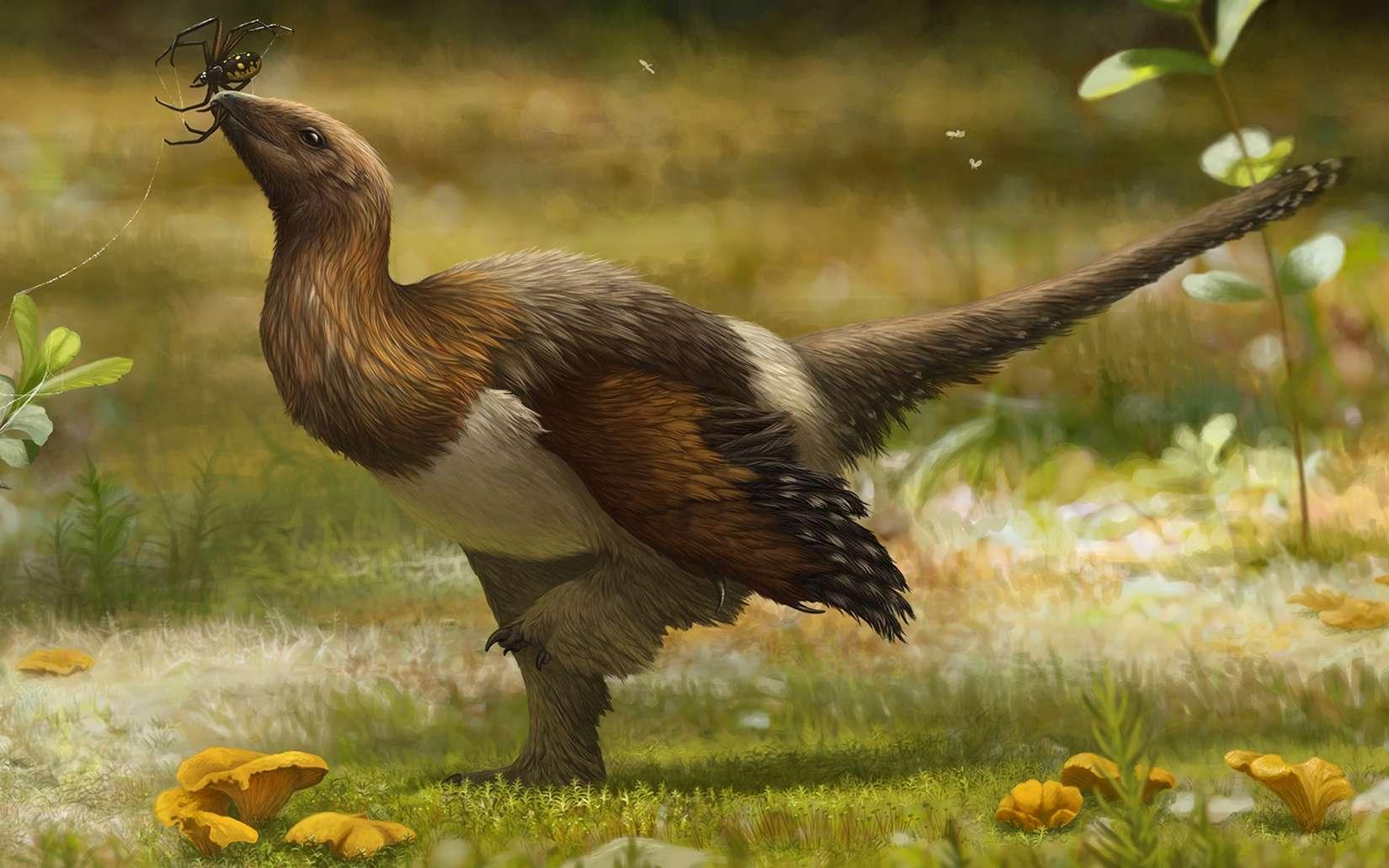 Une représentation de Serikornis sungei, alias Silky, un dinosaure joliment plumé du Jurassique. © Emily Willougby, CC by-sa 4.0