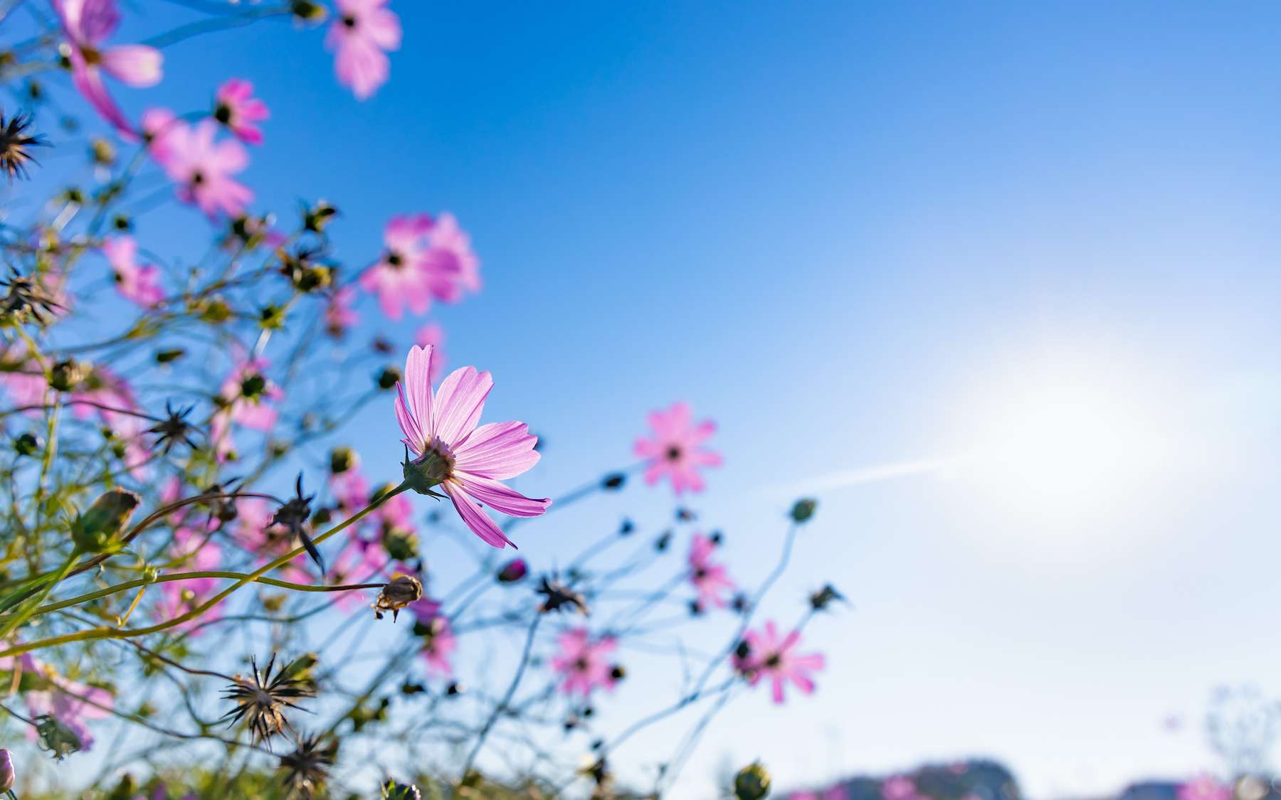 Le phototropisme est la faculté de la plante à s'orienter vers une source lumineuse lors de sa croissance. © taka, Adobe Stock