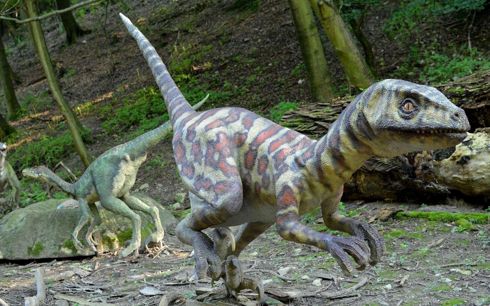 Les paléontologues admettent globalement que les dinosaures possédaient une certaine forme d'intelligence, mais la majorité n'atteint pas celle des oiseaux modernes. Les Vélociraptors sont très populaires vis-à-vis du public. Les Troodon, moins populaires, sont pourtant largement reconnus pour leur intelligence. © PxHere