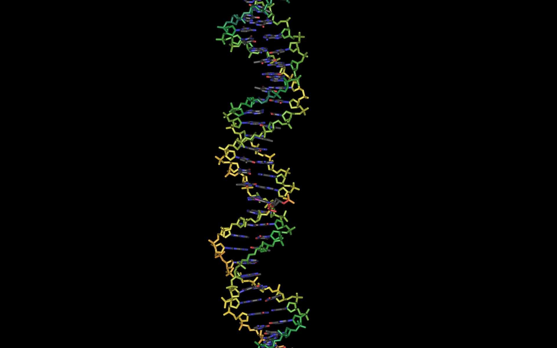 Le séquençage complet du génome humain a été achevé en 2003. Depuis, grâce à l'amélioration des techniques, il en coûte de moins en moins de temps et d'argent. Ainsi, avant même d'être nés, les bébés pourraient déjà avoir subi un test ADN. © Yunxiang987, StockFreeImages.com