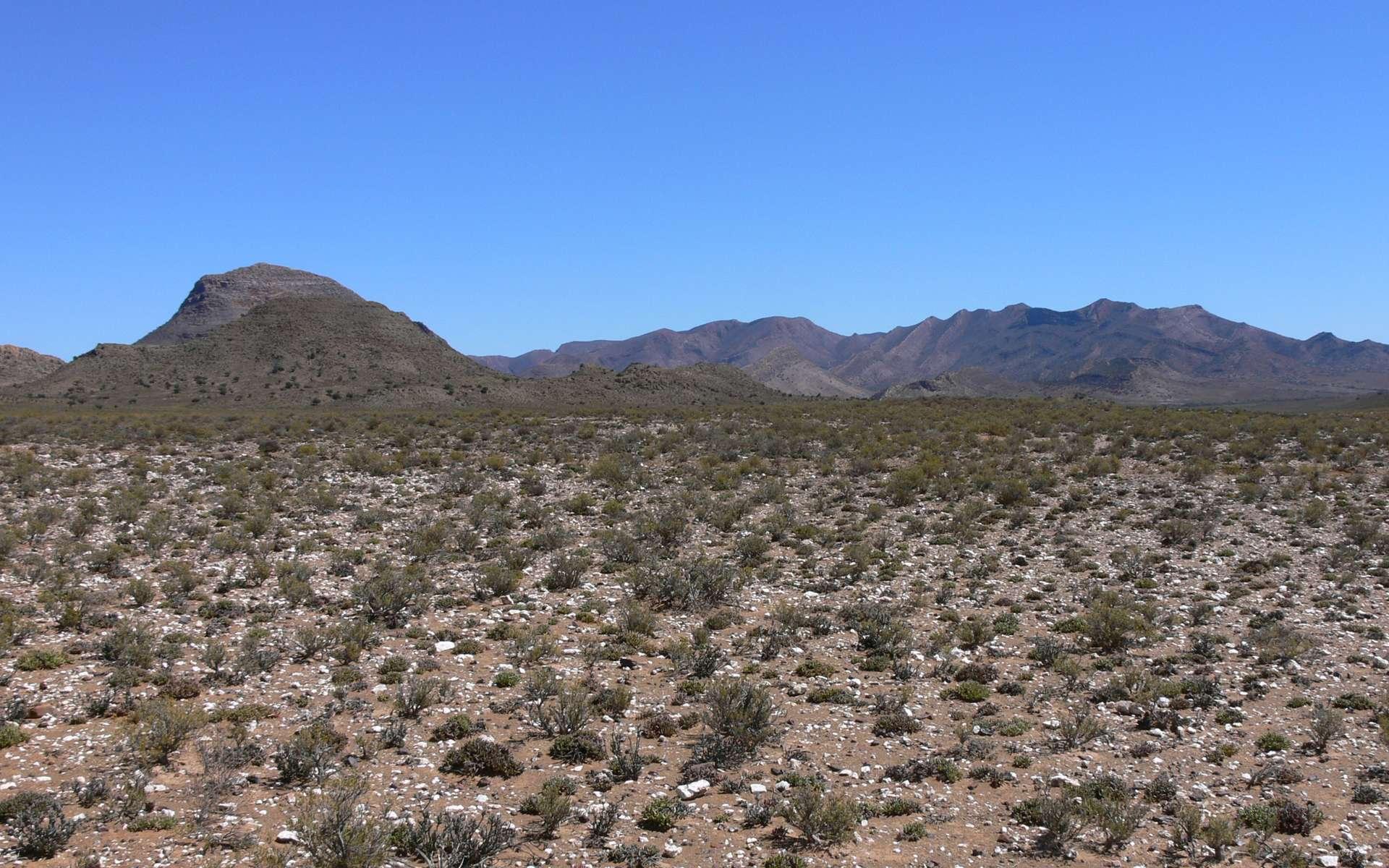 Le Karoo (mot khoïkhoï signifiant le « pays de la soif ») est un semi-désert situé en Afrique du Sud. © Winfried Bruenken, CC by-sa 2.5
