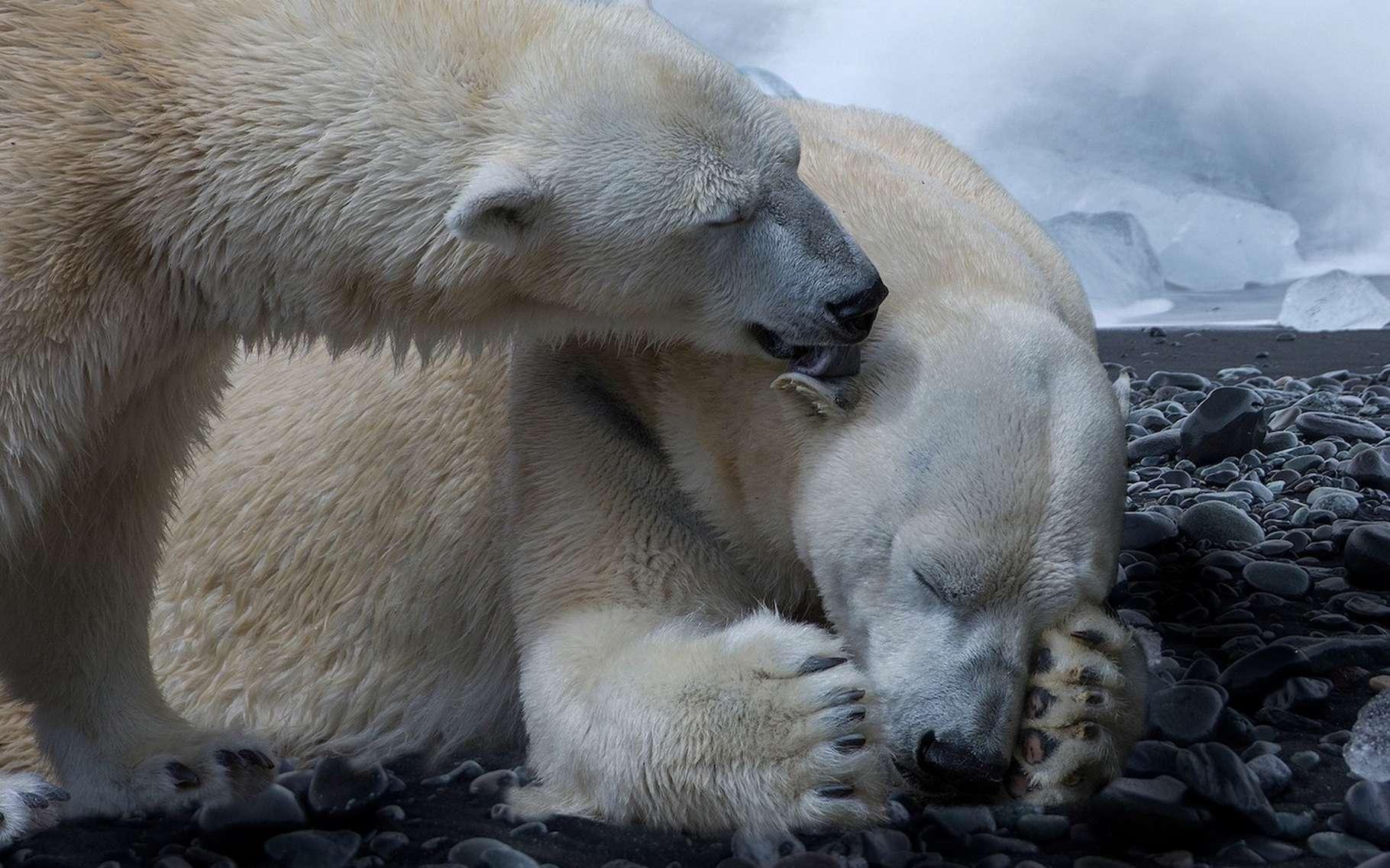 Selon une équipe internationale de chercheurs, le climat se réchauffe aujourd'hui trop vite pour laisser le temps aux animaux de s'adapter. © 4924546, Pixabay License