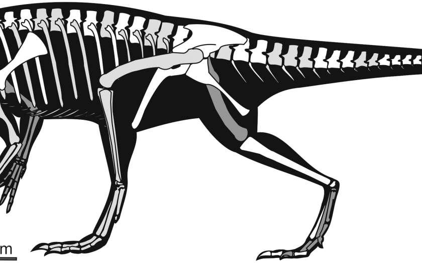 Panphagia protos était long de 1,5 m et haut de 30 cm environ. Crédit : Ricardo N. Martinez, Oscar A. Alcober