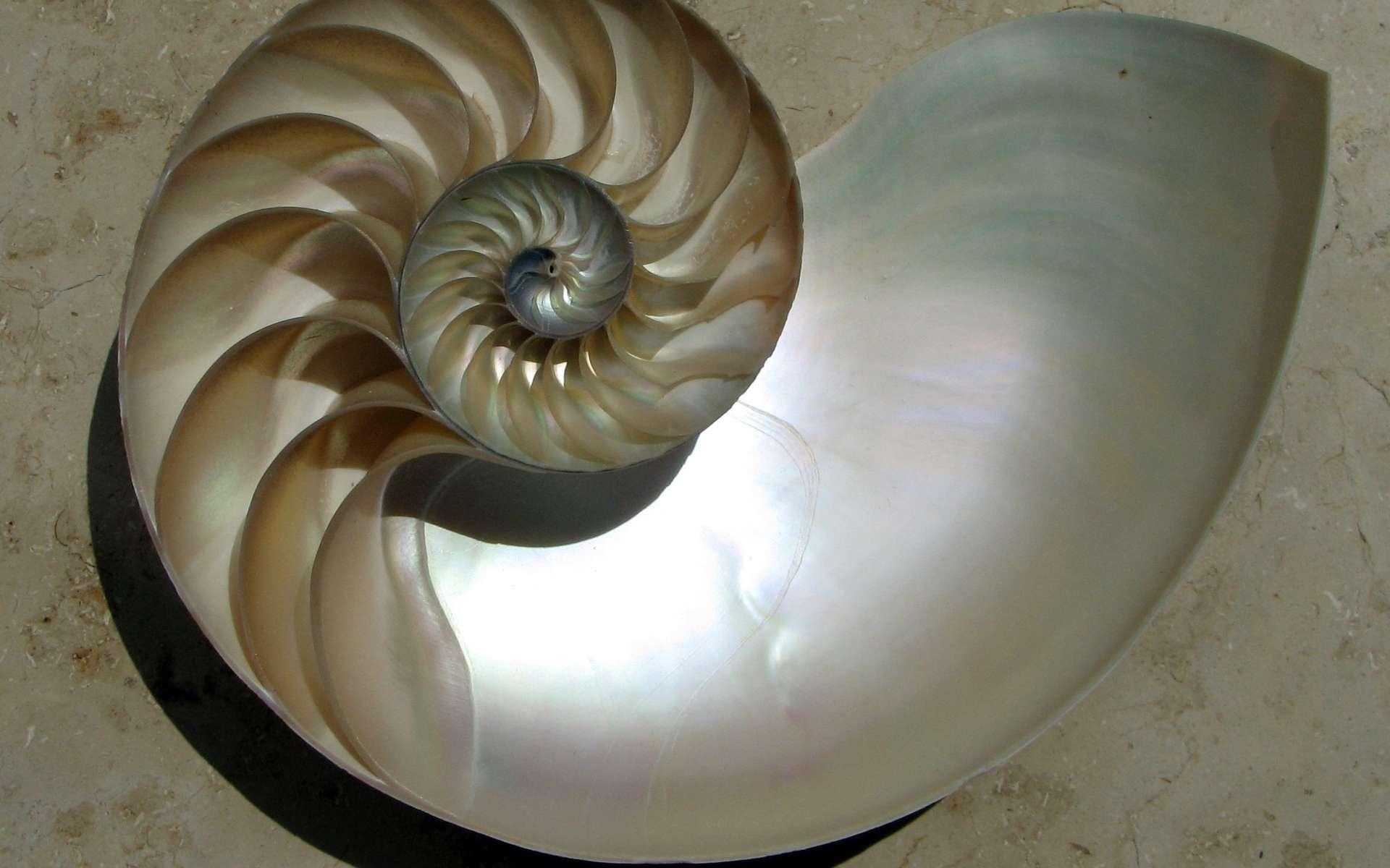 La nacre qui recouvre certains coquillages inspire les chimistes. En imitant sa structure, ils ont réussi à fabriquer une céramique dix fois plus résistante que les céramiques ordinaires. © Chris 73, Wikimedia Commons, cc by sa 3.0
