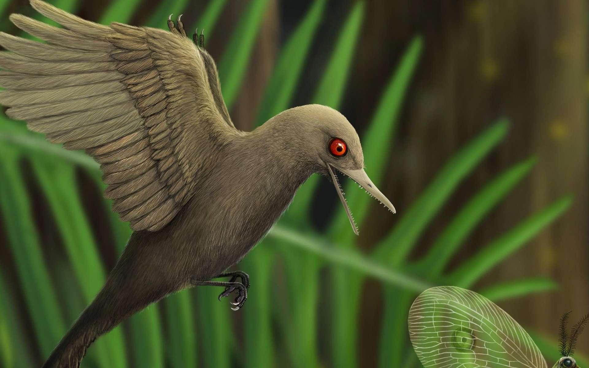 Oculudentavis khaungraae, un minuscule dinosaure à tête d'oiseau. © HAN Zhixin, Los Angeles Natural History Museum