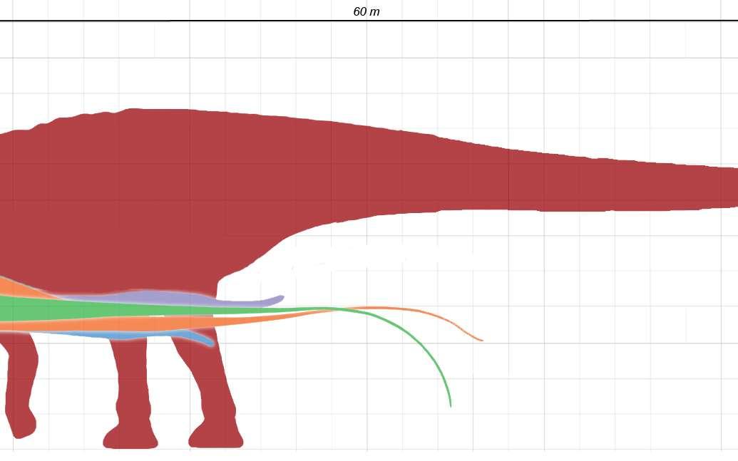 Silhouettes à l'échelle des plus grands animaux terrestres. © Dinoguy2, Wikimédia CC by-sa 3.0