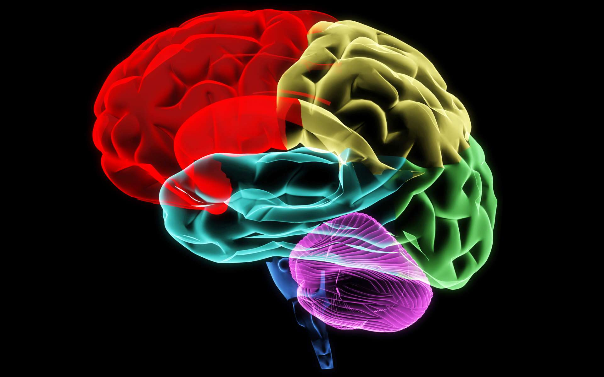 Les chercheurs ont créé des minicerveaux ressemblant à du cortex grâce à des cultures cellulaires en trois dimensions. © Neo Edmund, Shutterstock
