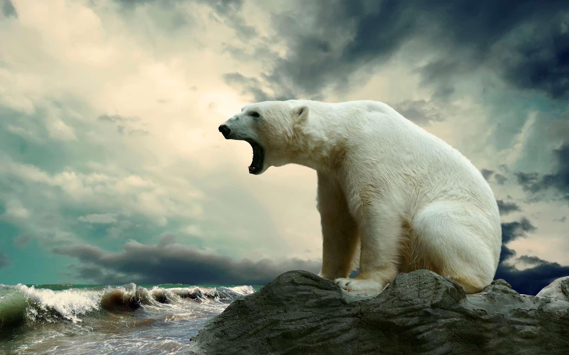 La disparition toujours plus grande et longue de la banquise en été menace les ours polaires. © Andrii Iurlov, Adobe Stock