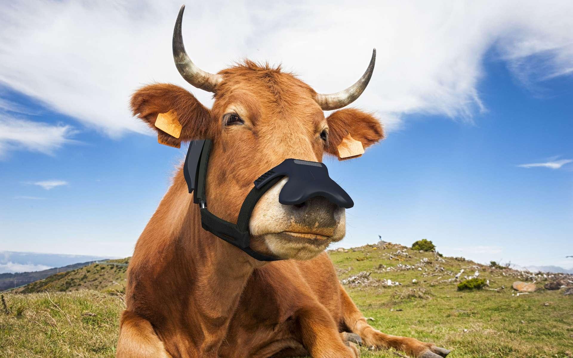 Un masque pour vaches contre le réchauffement climatique. © Zelp