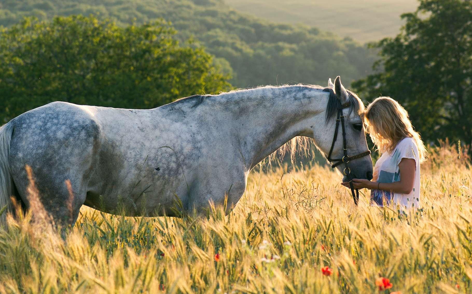L'histoire de Hans le malin nous apprend à nous méfier des apparences. Mais elle raconte tout de même l'expérience incroyable vécue par un cheval doué de compétences cognitives sociales hors du commun. Un cheval pas si bête ! © Laszlo, Adobe Stock