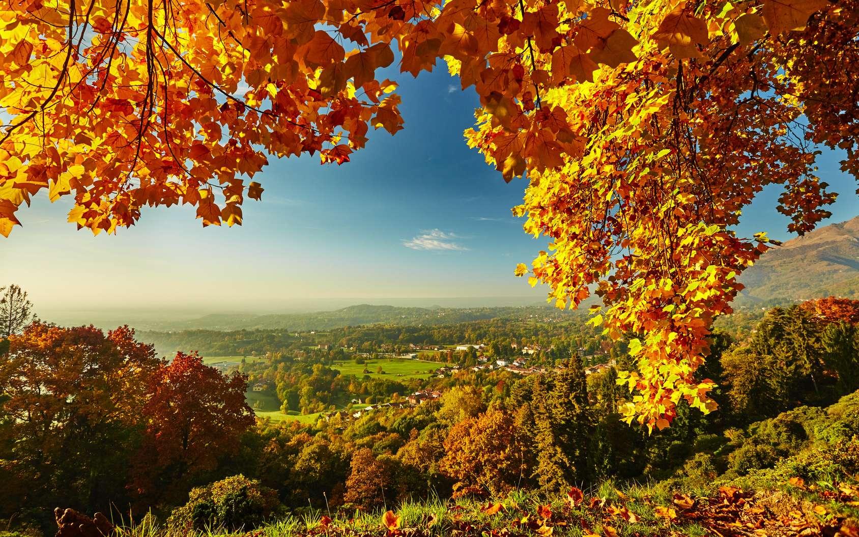 Paysage d'automne, saison où les arbres se teintent d'or et de pourpre. © matteozin, fotolia