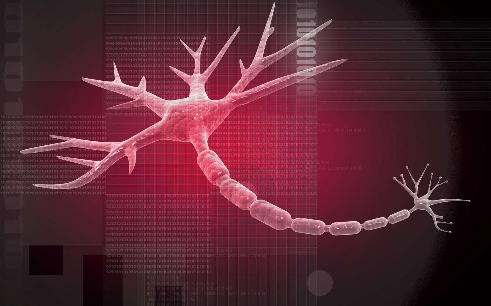 Dans la sclérose en plaques, le système immunitaire s'attaque à la myéline qui entoure l'axone des neurones. © jscreationzs, Fotolia