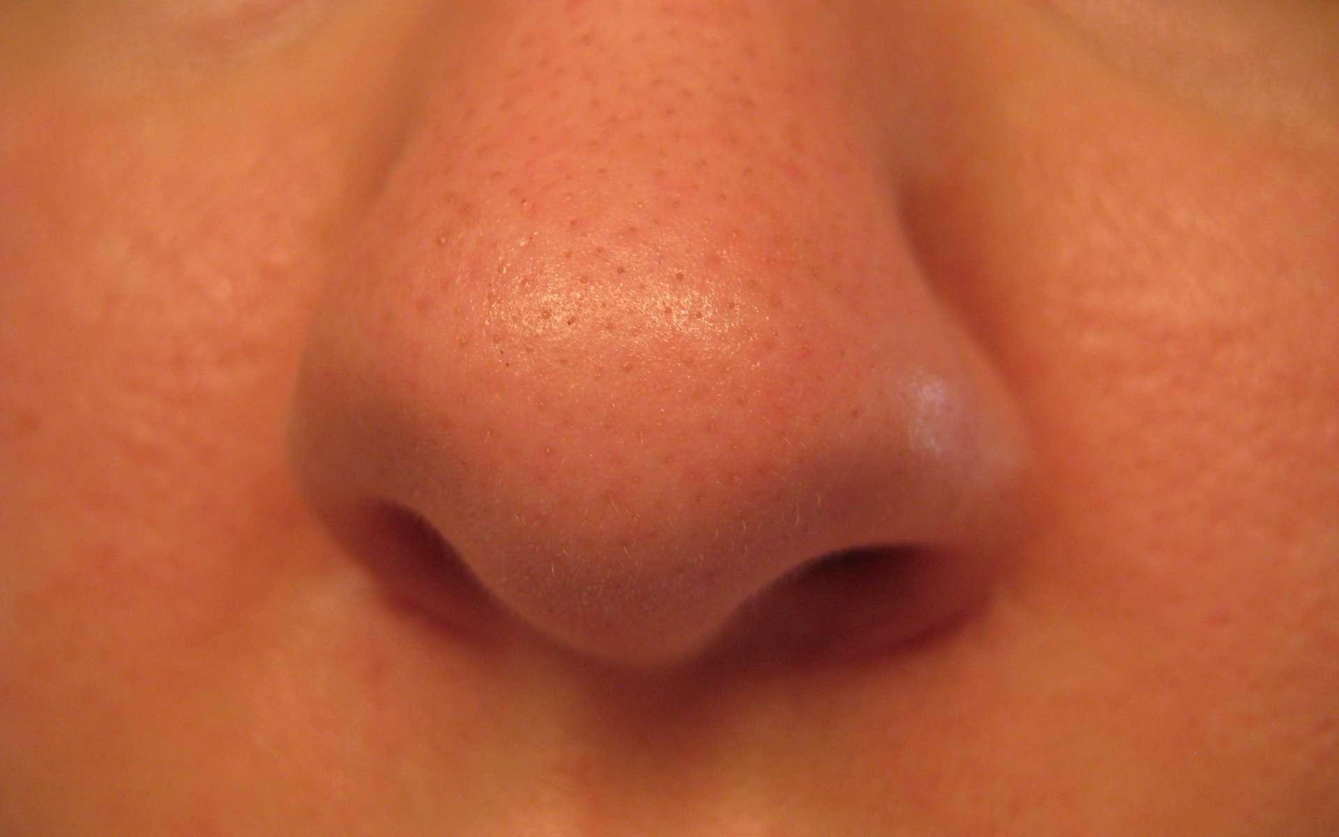 L'odorat est un sens important chez l'Homme. C'est le seul parmi les cinq dont on dispose à être directement relié au système limbique du cerveau, associé aux émotions. Il n'y a rien de surprenant à corréler odeur et peur ou dégoût. © capl@washjeff.edu, cc by nc sa 3.0,