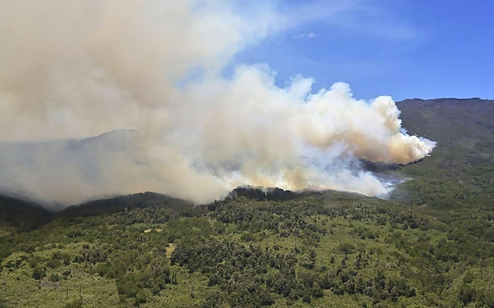 Incendie de forêt dans le parc national du Mont Kenya, le 1er mars 2019. © Tony Karumba, AFP, Archives