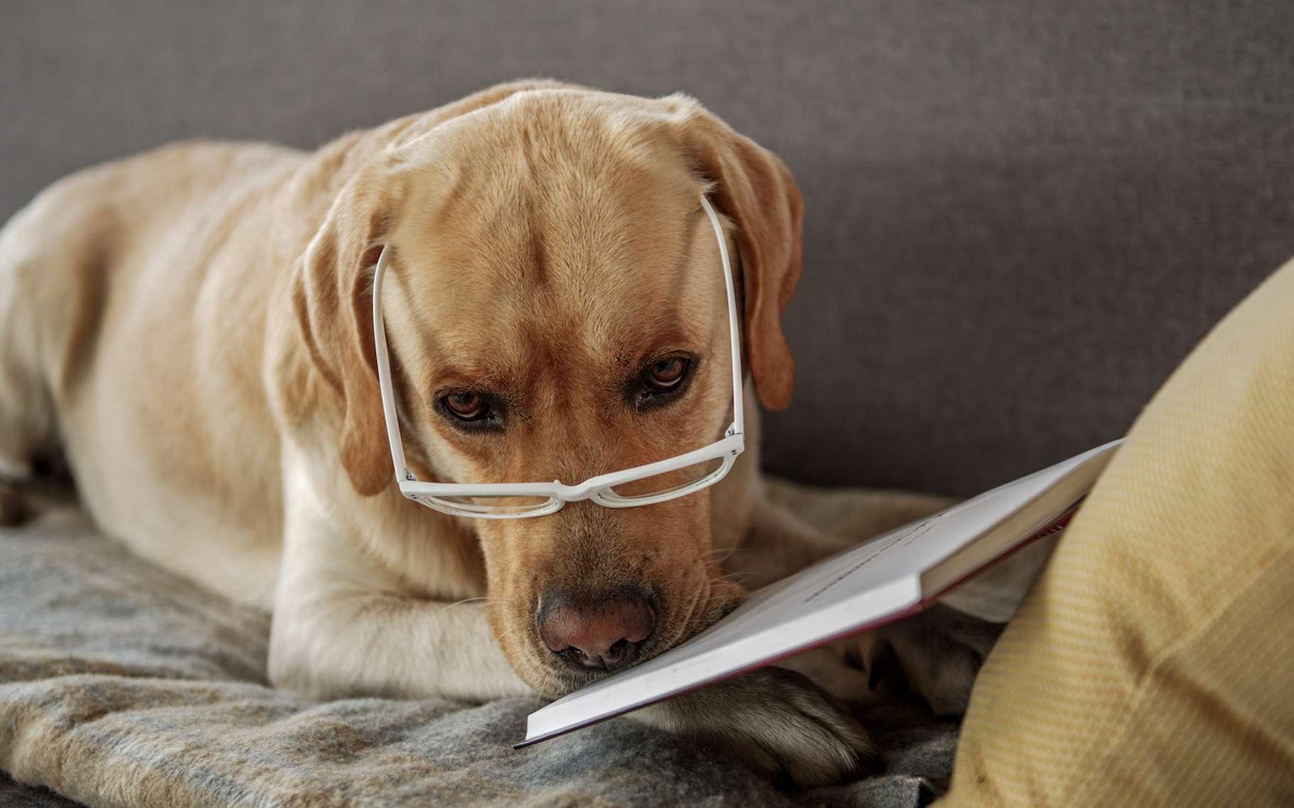 Selon une étude réalisée par des chercheurs américains, le chien serait plus intelligent que le chat. © YakobchukOlena, Fotolia