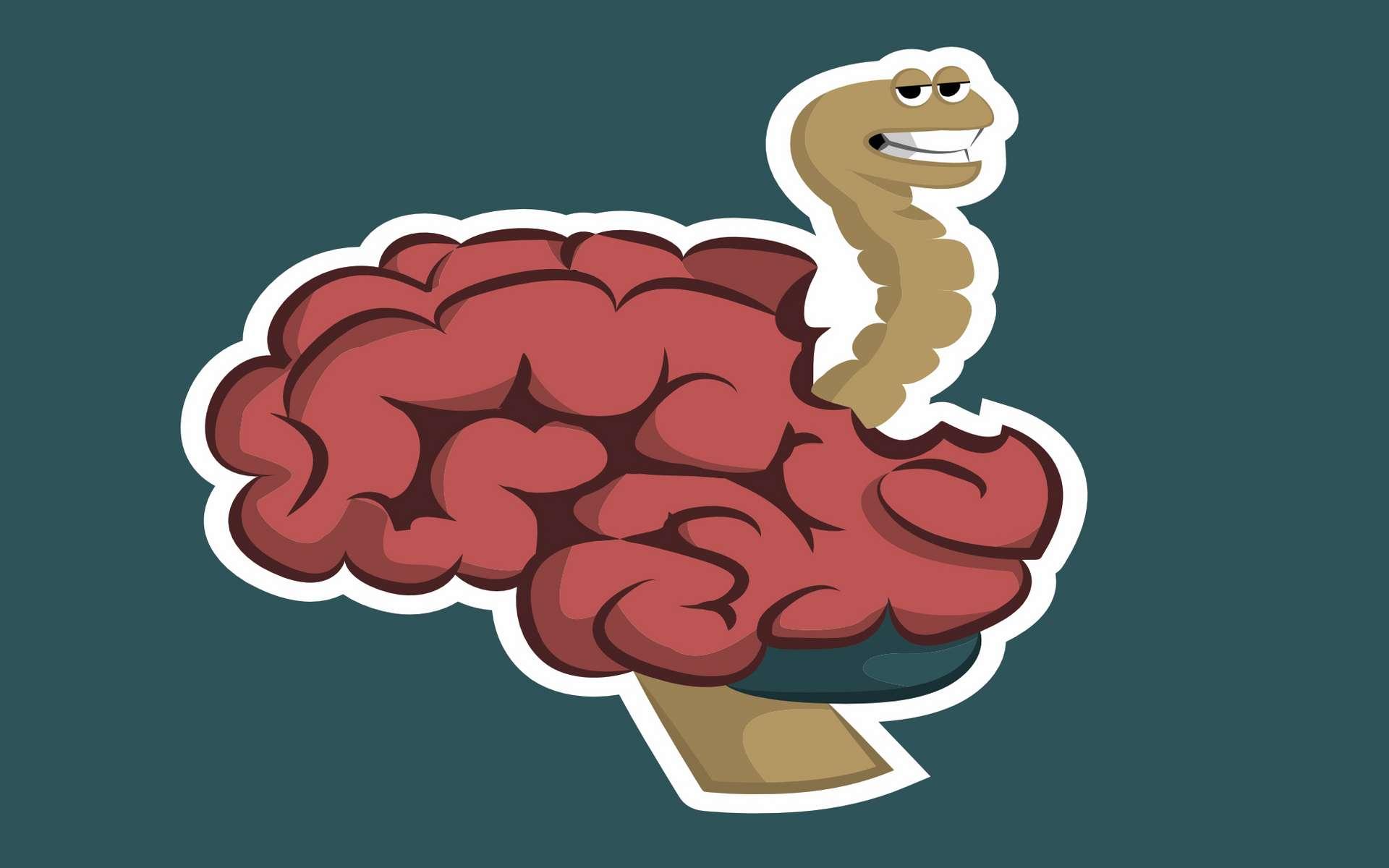Le ver solitaire était logé dans son cerveau depuis 14 ans. © 13fosgen, Adobe Stock
