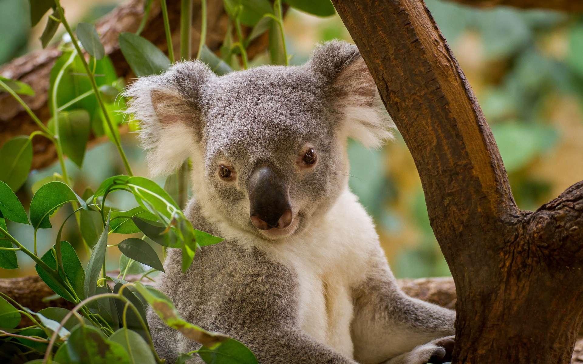 Les animaux menacés doivent patienter très longtemps avant de faire l'objet d'une mesure de protection de la part de la Cites. © Michel Espig, Flickr