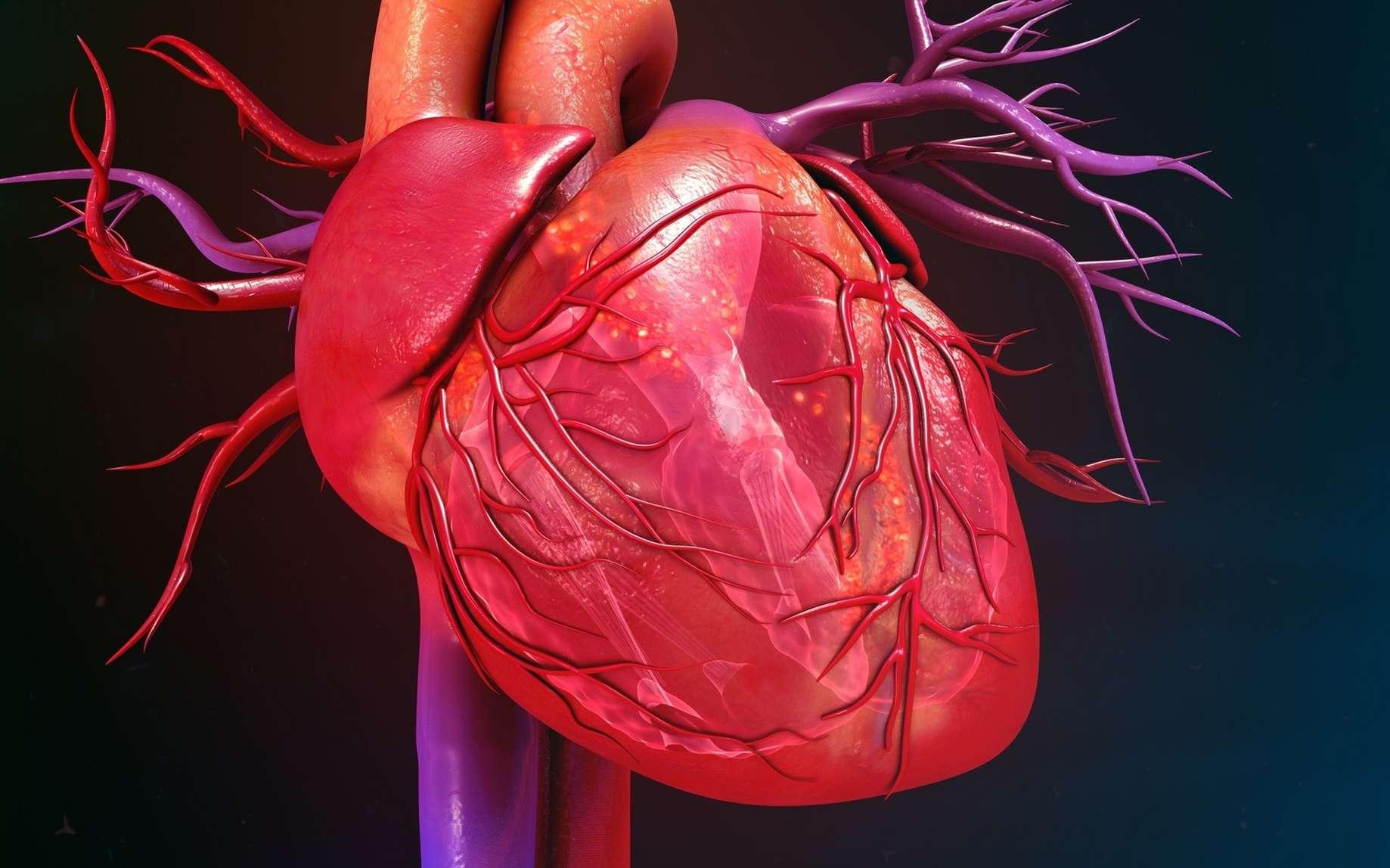Des chercheurs aimeraient trouver un moyen de régénérer du tissu cardiaque après un infarctus. © 7activestudio, Fotolia