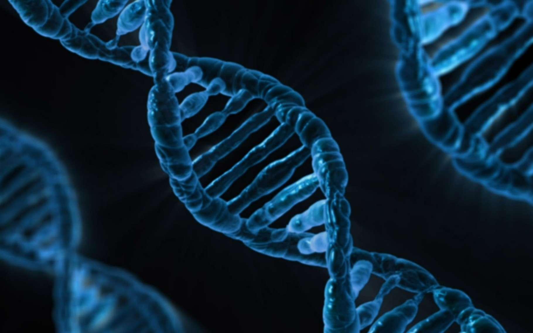 L'ADN est une mémoire mais il peut aussi servir à calculer.© CNRS