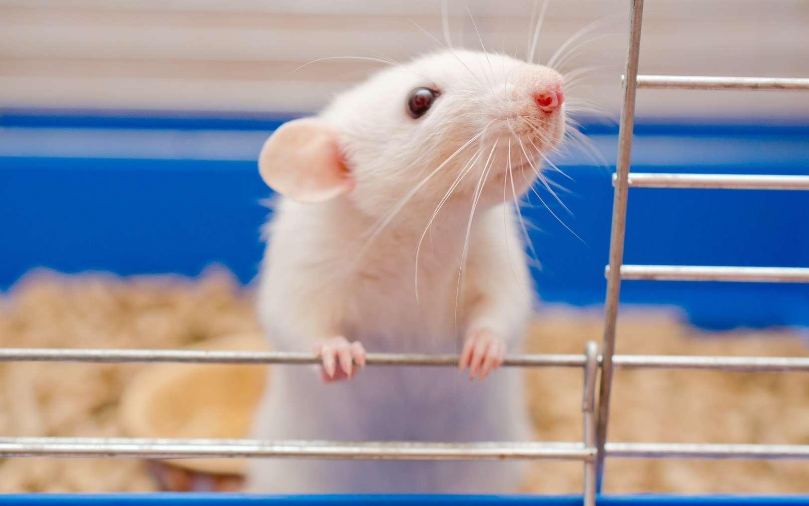Peut-on se passer des tests sur les animaux ? © Kirill Kurashov, Fotolia