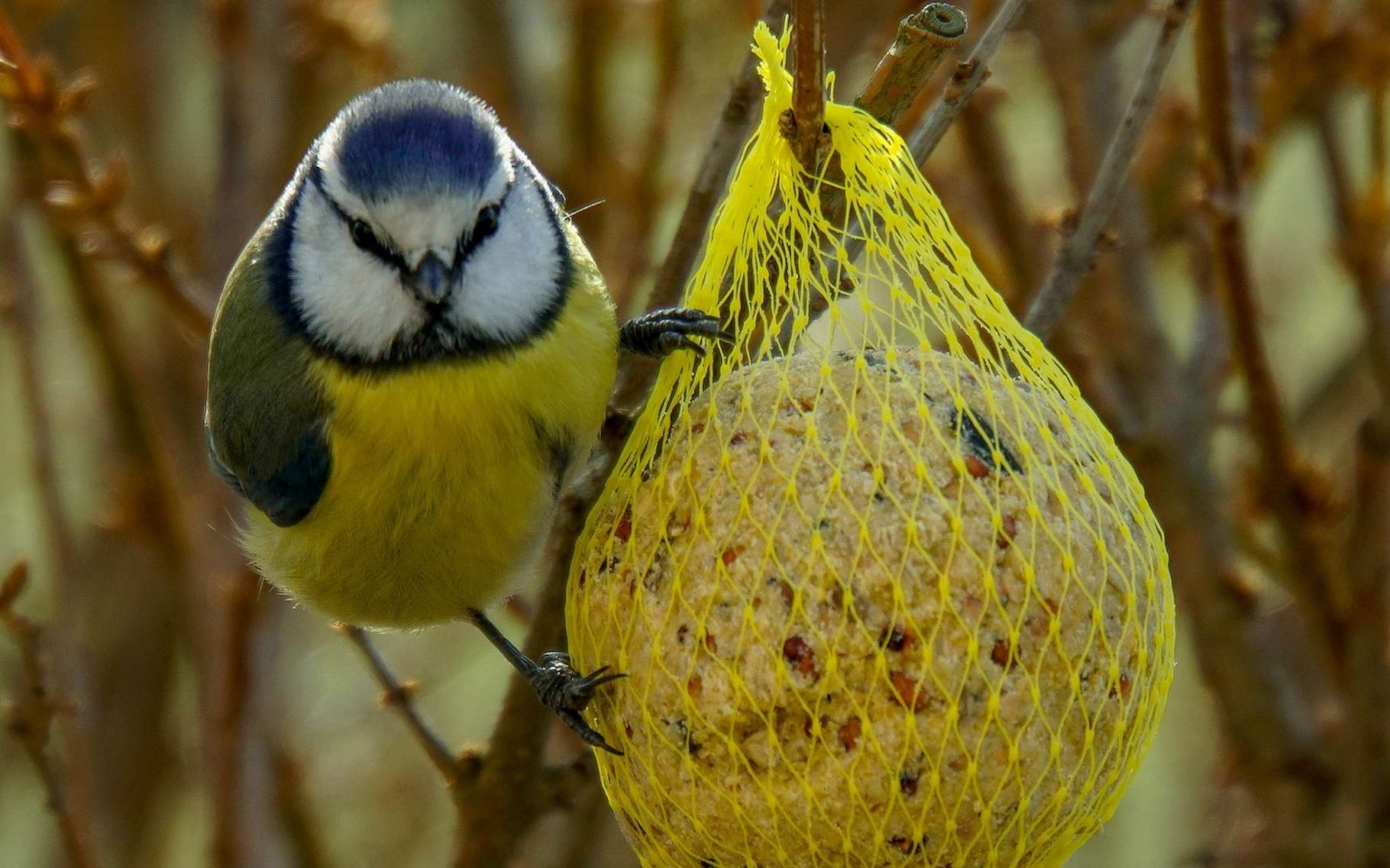 Des chercheurs américains se sont intéressés aux conséquences d'une habitude très répandue : nourrir les oiseaux sauvages dans son jardin. Ils ont découvert que nos interactions avec la nature ne s'arrêtent pas au simple fait de déposer des graines dans une mangeoire. © wpoeschl, Pixabay, CC0 Creative Commons