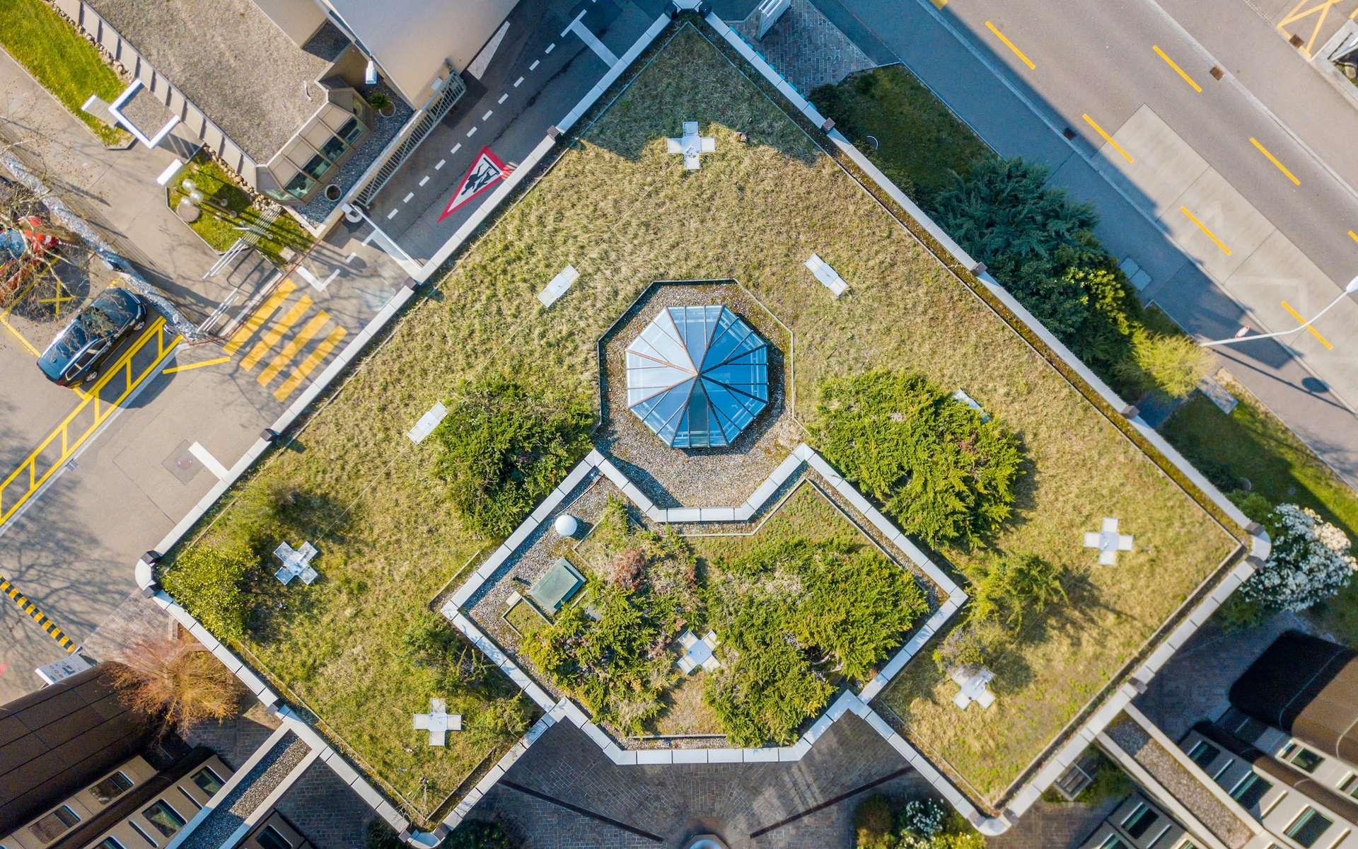 Jardins urbains : un potentiel sous-exploité pour la culture de fruits et légumes. © Mario, Adobe Stock