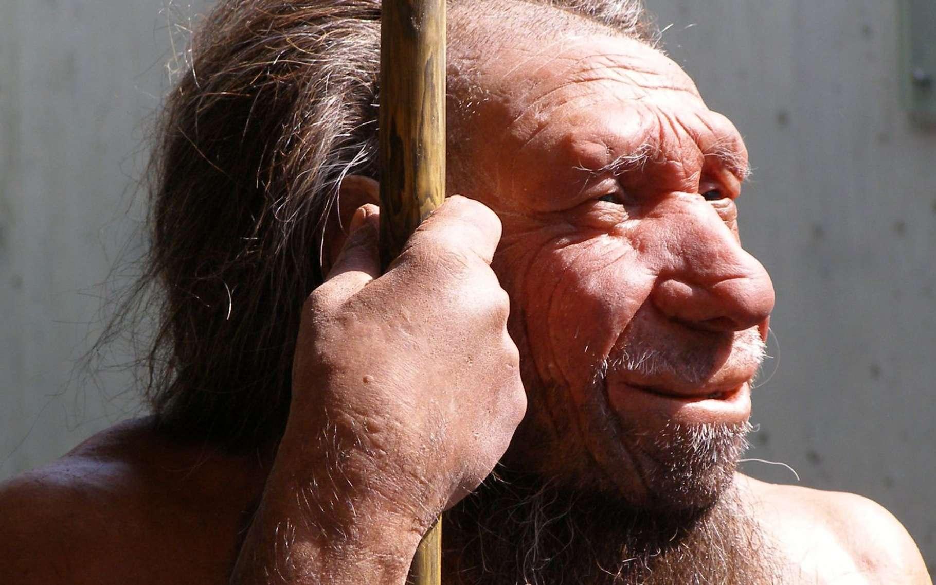 Une nouvelle espèce humaine a peut-être été découverte. Il pourrait s'agir d'un cousin plus éloigné que Néandertal. Ici une reconstitution de Néandertal. © Erich Ferdinand, Flickr, CC by 2.0