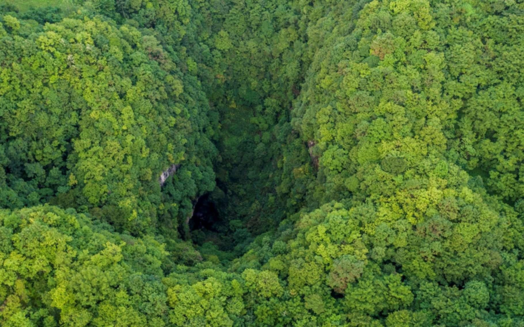 Ces gouffres découverts en Chine se trouvent dans une forêt humide et, difficilement accessibles, abritent une biodiversité préservée. © Ma Lie in Xi'an, Chinadaily.com.cn
