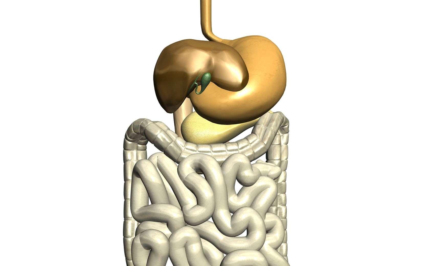 L'âge moyen de survenue d'un cancer de l'estomac est de 70 ans. © Ericos - Fotolia