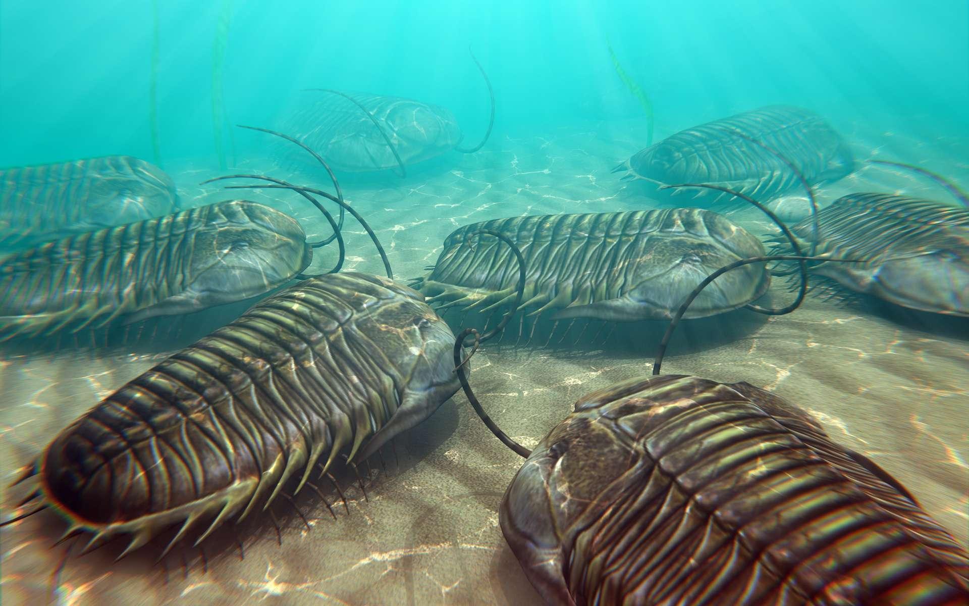Les trilobites ont peuplé les mers pendant plus de 20 millions d'années avant leur extinction, à la fin du Permien. © auntspray, Adobe Stock