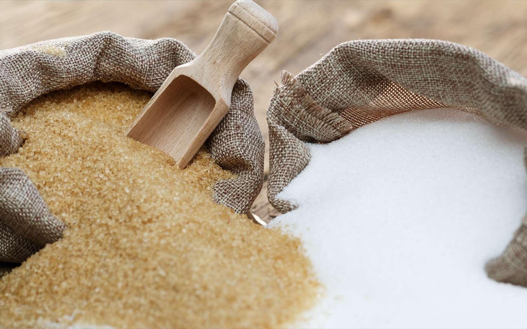 Le sucre roux contient plus de sels minéraux et de vitamines que le sucre blanc raffiné. © fotorince, Shutterstock
