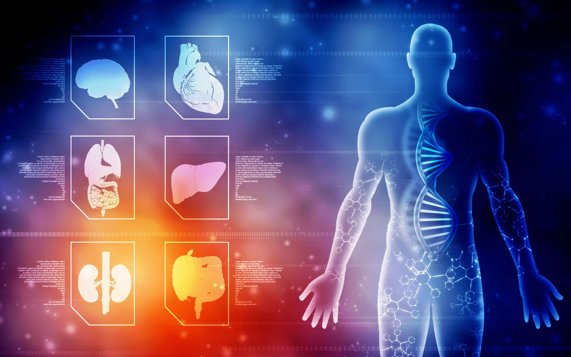 Des tissus d'organes humains ont pu être recréés artificiellement. © jijomathai, Adobe Stock