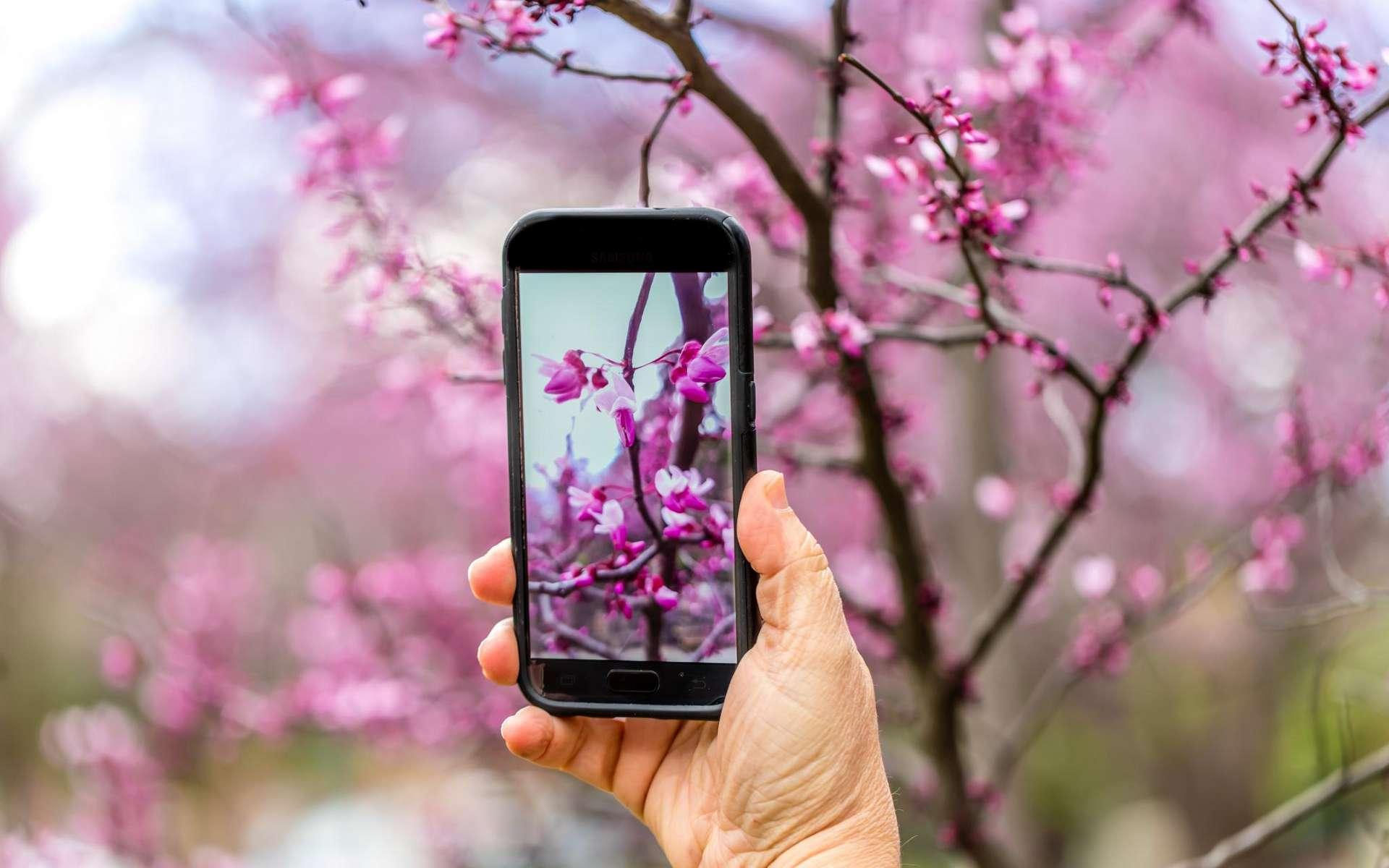 Bientôt des messages odorants par téléphone ? © Quick Shot Photos, CC by-nc-sa