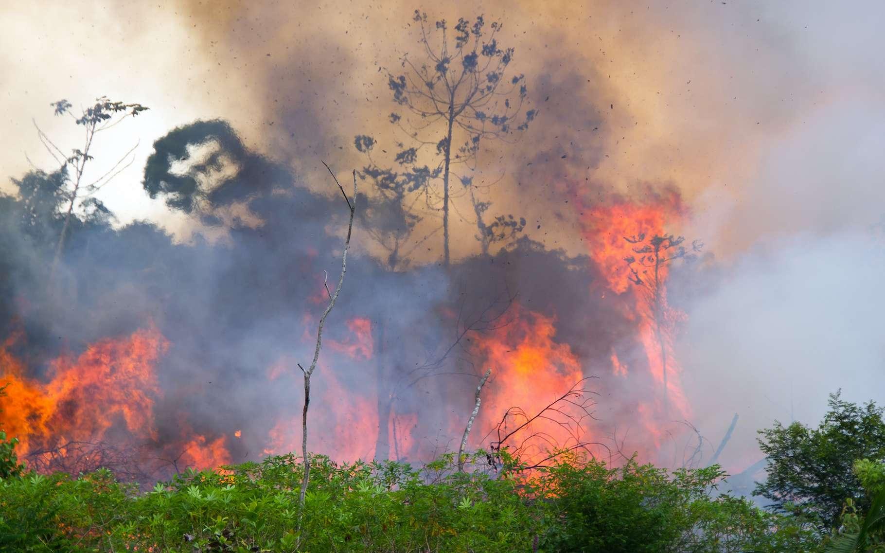 Au mois d'août 2019, la forêt amazonienne a subi trois fois plus d'incendies qu'à la même période en 2018. © pedarilhos, Adobe Stock
