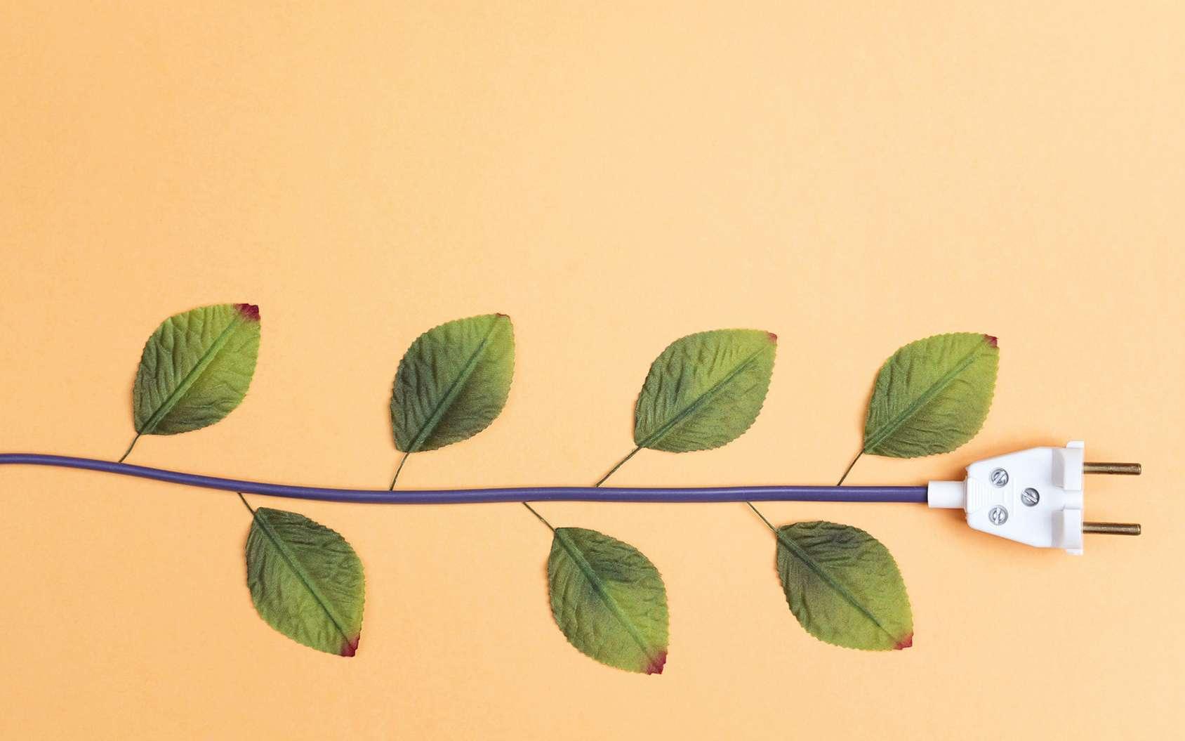 Des légumes plus gros et des plantes qui poussent plus vite sans pesticides et sans engrais, c'est possible grâce à l'électricité. © WindyNight, Fotolia